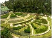 Giải pháp công nghệ XLNT phân tán, chi phí thấp,  phù hợp với điều kiện Việt Nam: Bể BASTAF và Bãi lọc trồng cây